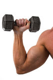 Zweiköpfiger Muskel und Dumbbell Stockfoto