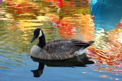 Zwem in kleurrijke wereld royalty-vrije stock afbeelding