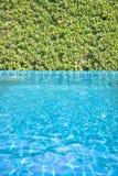 Zwembad met boommuur Stock Afbeeldingen
