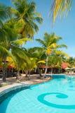 Zwembad met kokosnotenpalmen Stock Afbeeldingen