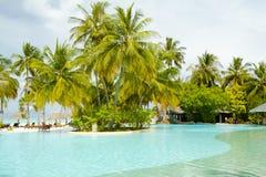Zwembad met palmen Royalty-vrije Stock Afbeeldingen