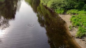Zwemmen de groeps wilde eenden en duiken voor vissen op de rivier in het park stock video