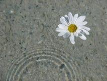 Zwemmende bloem Royalty-vrije Stock Afbeeldingen