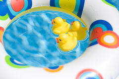 Zwemmende Eenden Stock Fotografie