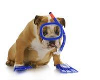 Zwemmende hond Stock Afbeeldingen