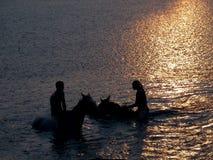 Zwemmende paarden Stock Foto
