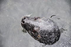 Zwemmende verbindingen in schoon water stock foto
