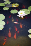 Zwemmende vissen stock afbeelding