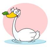 Zwemmende Zwaan met een Blad in Zijn Bek Stock Afbeeldingen