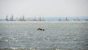 Zwemmer in het meer Royalty-vrije Stock Afbeelding