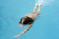 Zwemmer in pool Stock Foto