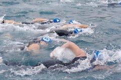 Zwemmers Stock Foto