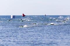 zwemmers Royalty-vrije Stock Foto