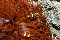 Zwemmers Royalty-vrije Stock Afbeeldingen