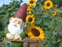 Zwerg mit einer Schubkarre und Sonnenblumen Stockbild