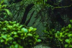 Zwergartige Garnelen in einem Miniaquarium lizenzfreies stockfoto