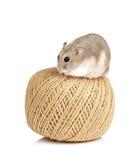 Zwergartiger Hamster Lizenzfreies Stockbild
