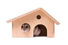 Zwergartiger Hamster im Haus Lizenzfreie Stockfotografie