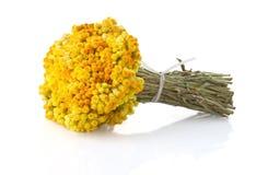Zwergartiges everlast blüht Blumenstrauß stockbild