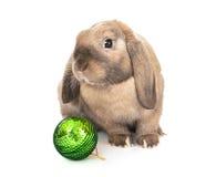Zwergartiges Kaninchen mit einem Weihnachtsspielzeug. Lizenzfreie Stockfotografie