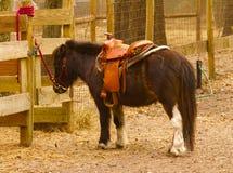 Zwergartiges Pferd Lizenzfreies Stockbild
