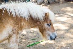 Zwergartiges Pferd Stockbilder