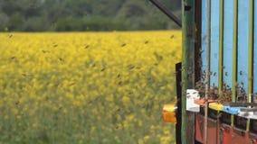 Zwerm van bijen stock footage