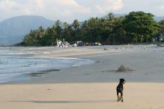 Zwerverhond op het strand Stock Afbeeldingen