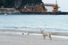 Zwerverhond op het strand Royalty-vrije Stock Foto's