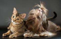 Zwetna de chat et de bolonka Photos stock