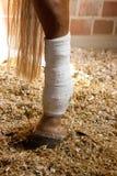 Związana koń noga Fotografia Royalty Free