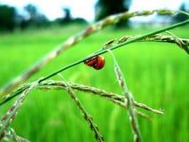 Związek piękna natura zdjęcia stock