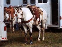 związanie koni. Obrazy Royalty Free