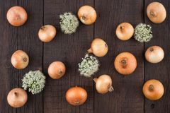 Zwiebel auf einem alten Holztisch Stockfotografie