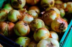 Zwiebel auf einem Gemischtwarenladen Lizenzfreie Stockbilder