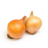 Zwiebel auf weißem Hintergrund Stockfotografie