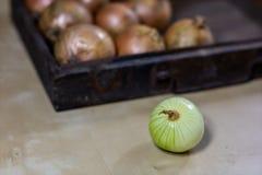 Zwiebel das beste Besondere für Grippe Sirup zugebereitet aus onio Stockfotografie