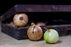 Zwiebel das beste Besondere für Grippe Sirup zugebereitet aus onio Lizenzfreie Stockbilder