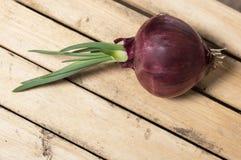 Zwiebel gekeimt auf einer Holzkiste Stockfoto