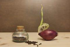 Zwiebel und Gewürz lizenzfreie stockfotos