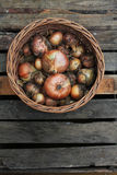 Zwiebel von der Ernte in einem Korb Lizenzfreie Stockbilder