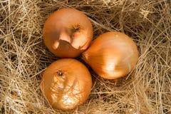 Zwiebeln auf Gras Lizenzfreies Stockbild