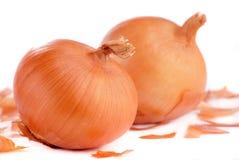 Zwiebeln auf weißem Hintergrund Stockfoto