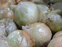 Zwiebeln in einem Bündel lizenzfreies stockfoto