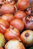 Zwiebeln in einem Markt Lizenzfreies Stockfoto