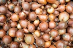 Zwiebeln hat viele nützlichen Vitamine stockfotografie