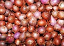 Zwiebeln im Markt. Stockbild