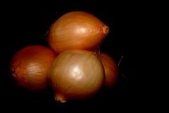 Zwiebeln lokalisiert auf schwarzem Hintergrund stockfotografie