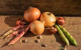 Zwiebeln und Bohnen werden dargestellt stockfotografie