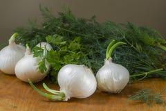 Zwiebeln und Kräuter Stockfoto